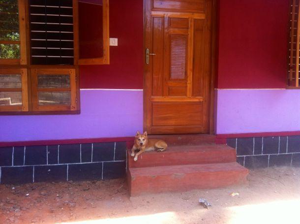 dog-house-india